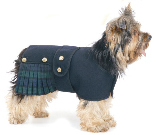 Dog dressed for Burns Night