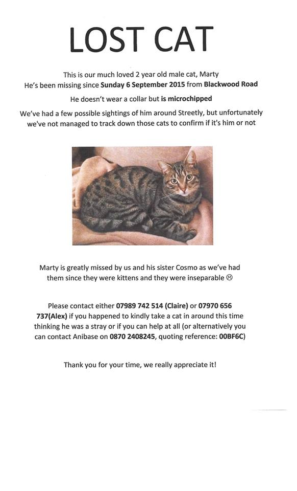 Lost cat - have you seen Marty?