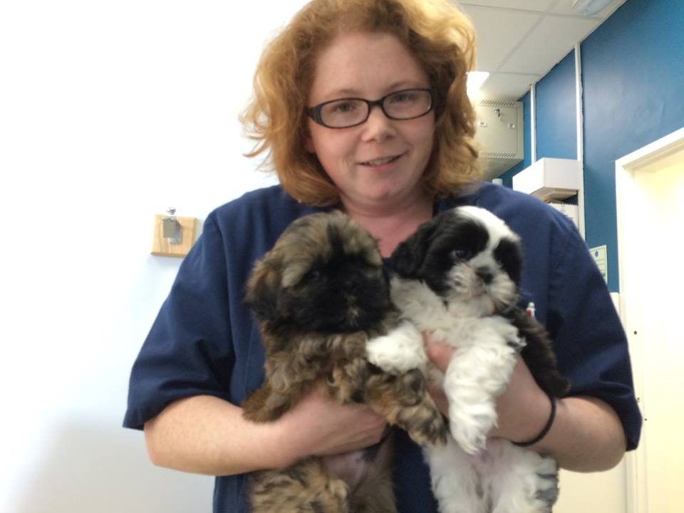 Dr Cora with shih tzu puppies