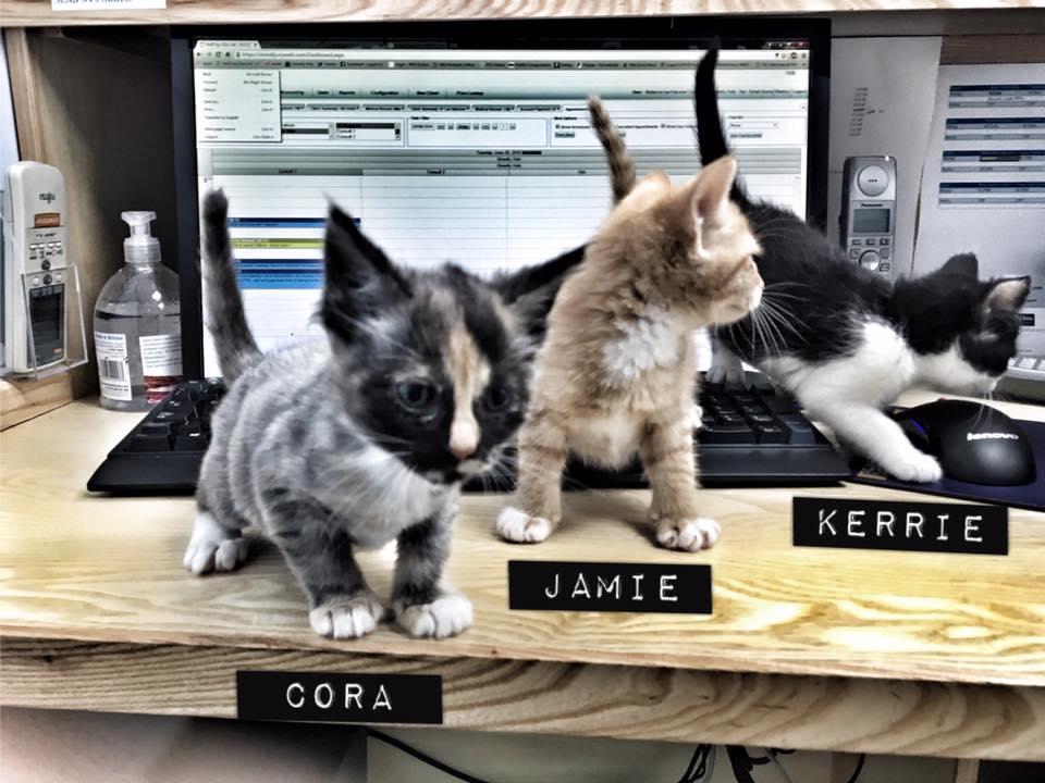 Cora, Jamie, Kerrie kittens