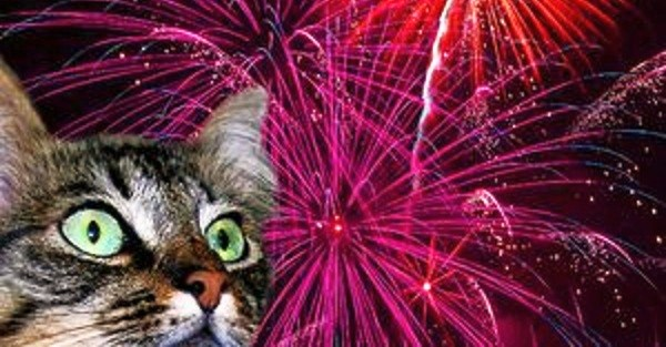 A cat with fireworks in the background