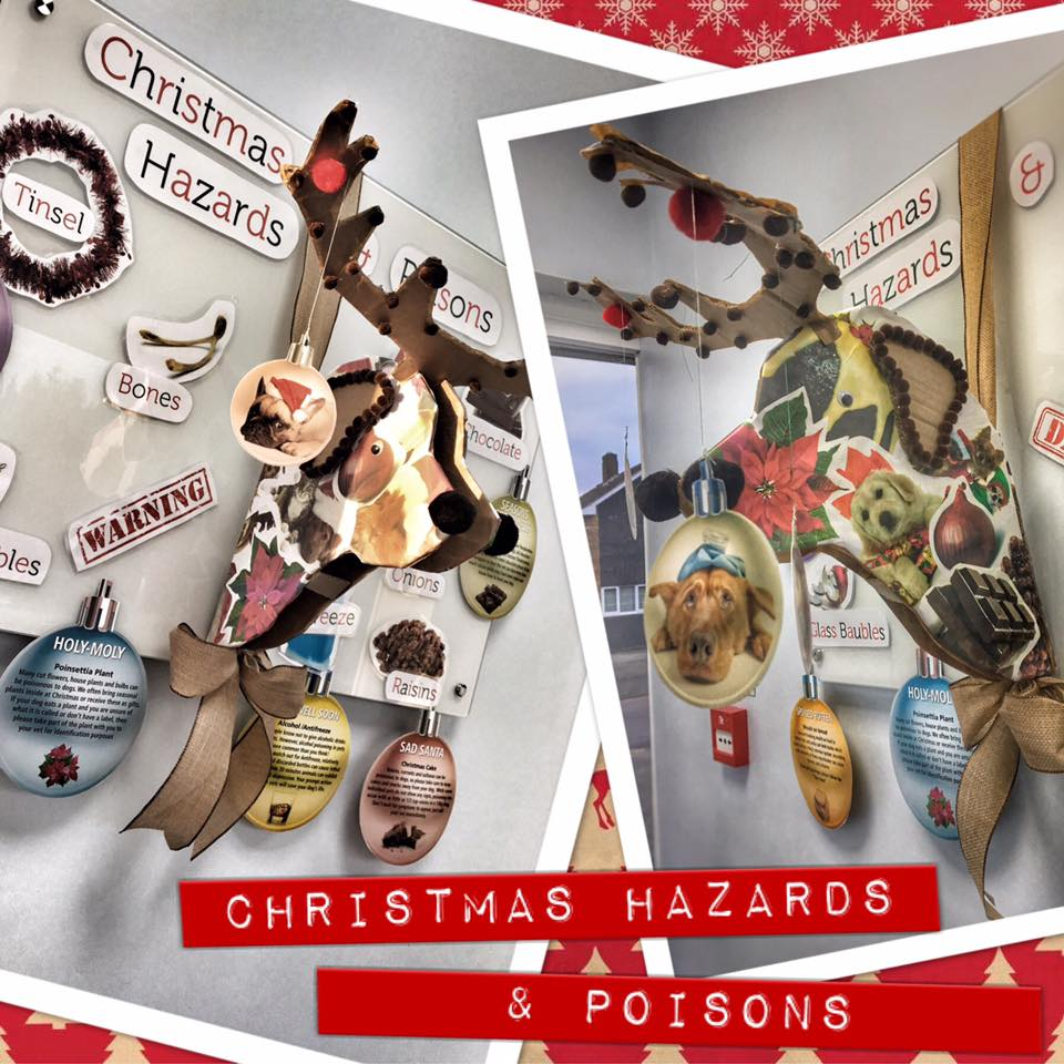 Christmas pet hazards and poisons