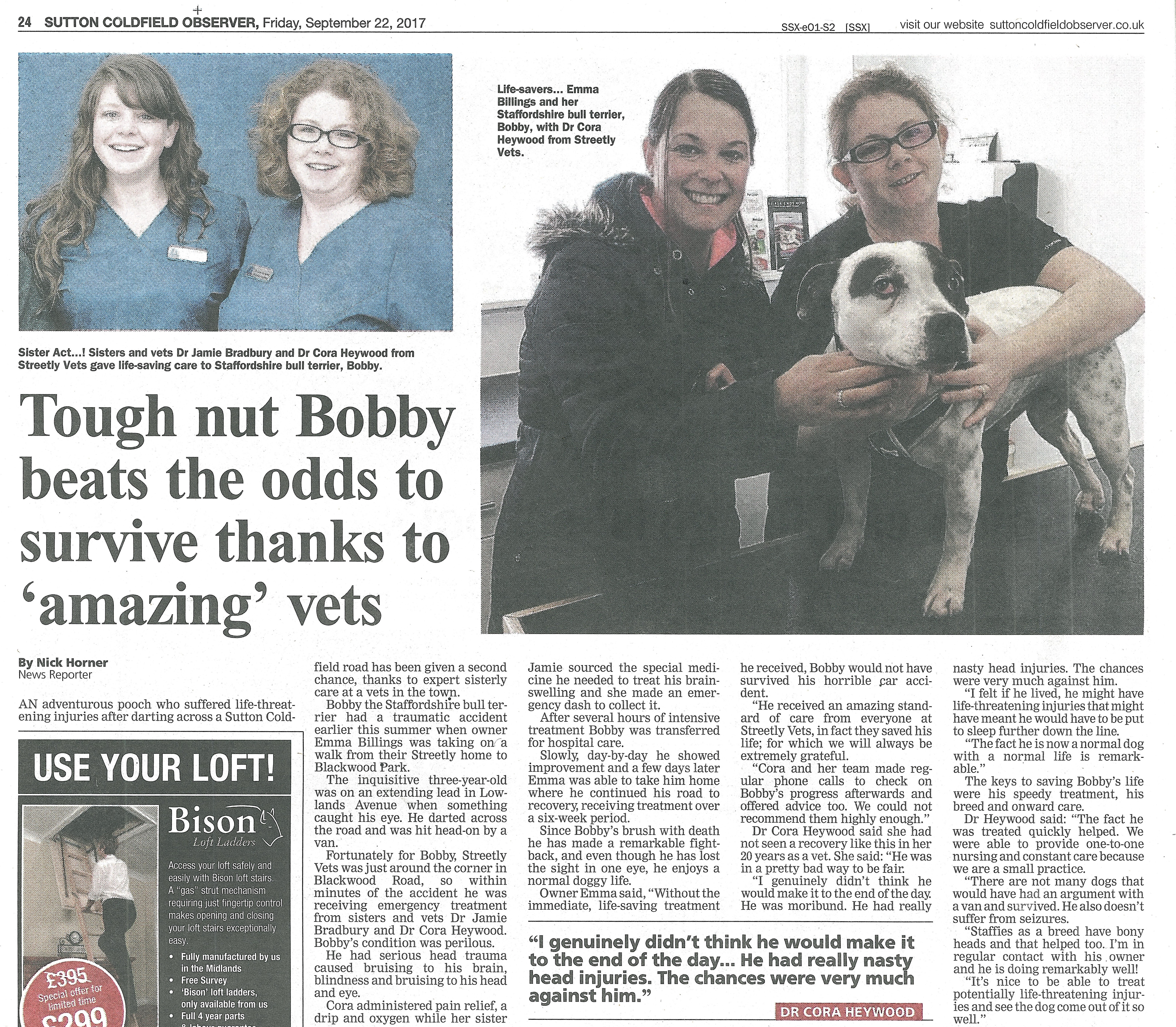Sutton Coldfield Observer headline about Bobby the Staffordshire Bull Terrier