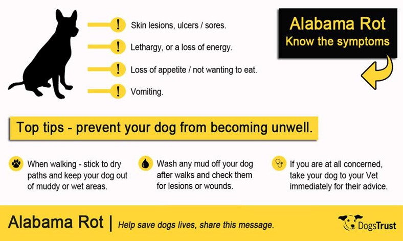 Alabama Rot advice
