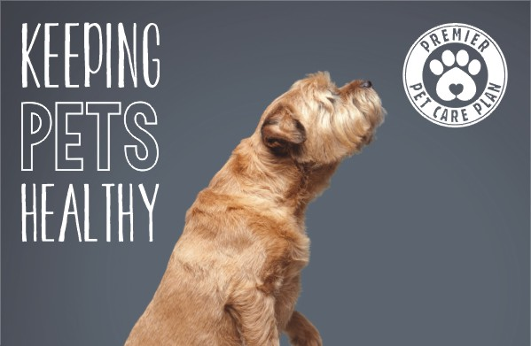 Keeping pets healthy with Streetly Vets 2