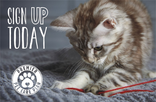Sign up today with Streetly Vets cat